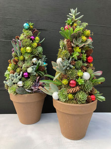 Mon Nov 16 2020 7pm, Succulent Tree, 201116191